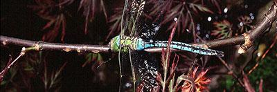 Foto Oasi WWF del Bottaccio