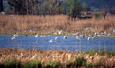 Lago di Massaciuccoli in provincia di Lucca