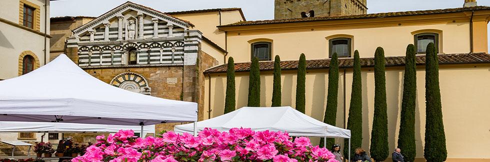 La Via Francigena a Lucca