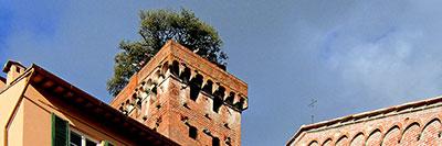 Foto Torre Guinigi