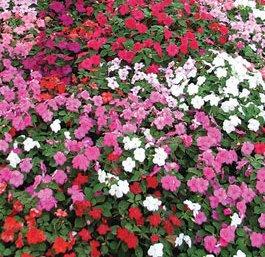 Marina in fiore la tradizionale fiera nel centro del tonfano del 28 04 2012 eventi a for Arredo giardino pietrasanta